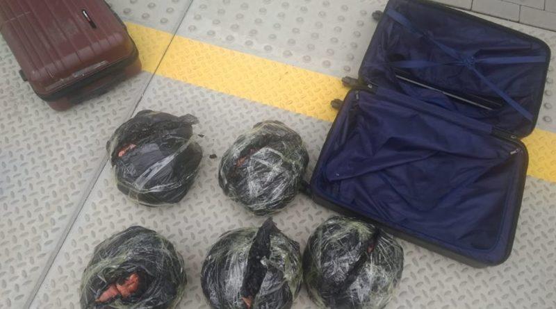 walizki konin 4 fot. policja 800x445 - Konin: zapomniane walizki z... perliczkami