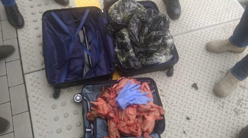 walizki konin 5 fot. policja 800x445 - Konin: zapomniane walizki z... perliczkami