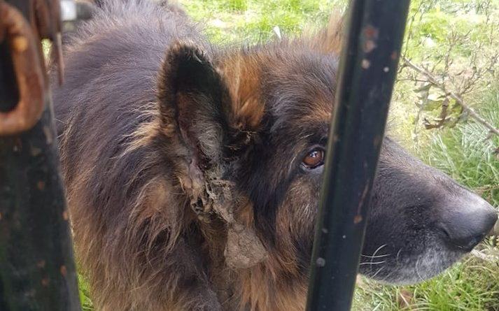zaniedbany pies z Jarocina fot. KPP Jarocin