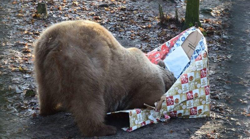 Baloo z prezentem fot. Zoo Poznań