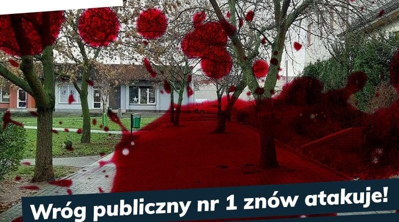 drzewa na osiedlu kosmonautow 2 fot. lewica razzem 800x445 - Poznań: Na osiedlu Kosmonautów trwa wojna o drzewa. I miejsce na procesję