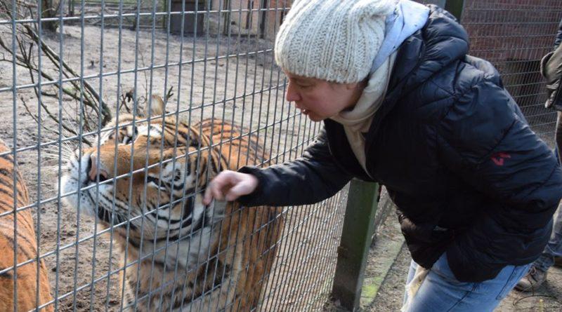 Ewa Zgrabczyńska i tygrys fot. Zoo Poznań