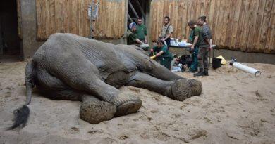 Ninio operacja fot. zoo