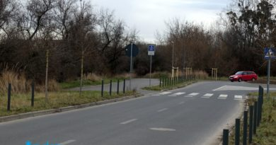 Nowe drzewa Politechnika Poznańska 2 fot. ZDM