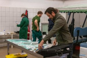 nowe zoo operacja slonia ninio fot. slawek wachala 3384 300x200 - Poznań: Operacja słonia Ninio. Dyrektor zoo prosi o trzymanie kciuków