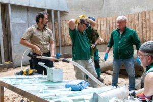 nowe zoo operacja slonia ninio fot. slawek wachala 3569 300x200 - Poznań: Operacja słonia Ninio. Dyrektor zoo prosi o trzymanie kciuków