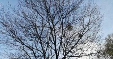 Petycja drzewa fot. ZaZieleń