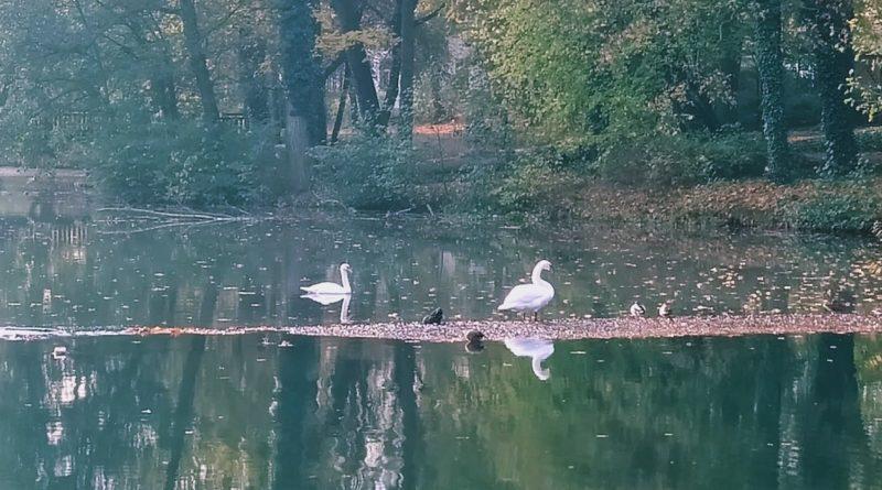Ptaki Sołacz