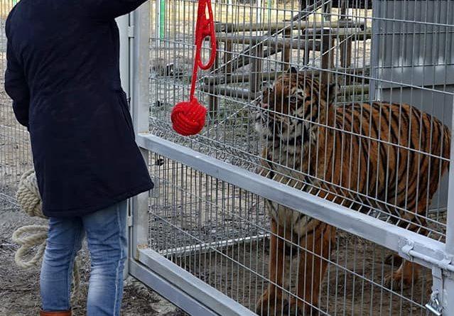 Poznań: Dyrektor zoo zaakceptowana przez Kana. Tygrys ją.... osiusiał