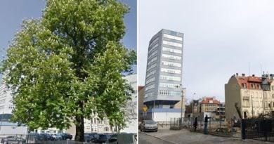 Jeżyce drzewo wycięte