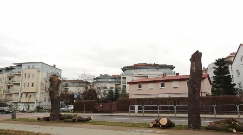 milczanska drzewa 3 fot. pawel 800x445 - Poznań: Za galerią Posnania powstanie... kolejny market