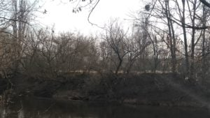 ostrow tumski wycinka drzew 1 300x169 - Poznań: Na Ostrowie Tumskim wycięto ponad dwieście drzew. Bo można