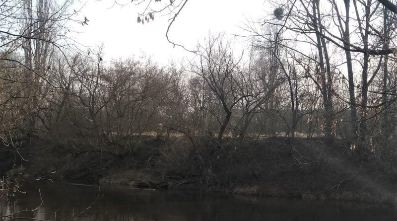 Ostrów Tumski wycinka drzew 1
