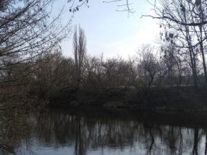 ostrow tumski wycinka drzew 3 300x225 - Poznań: Na Ostrowie Tumskim wycięto ponad dwieście drzew. Bo można
