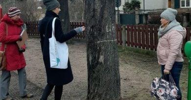 park Wieniawskiego drzewa fot. PdM