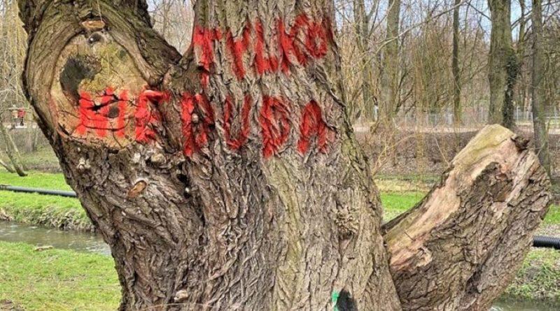 park wodziczki drzewo 800x445 - Poznań: W parku Wodziczki znów jest kałuża. I drzewa z napisami