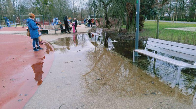 park wodziczki kaluza 2  800x445 - Poznań: W parku Wodziczki znów jest kałuża. I drzewa z napisami