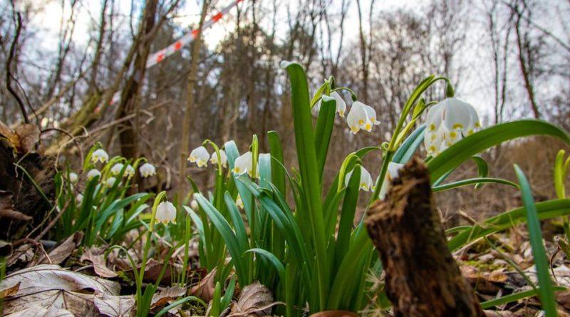 śnieżyca wiosenna fot. S. Wąchała