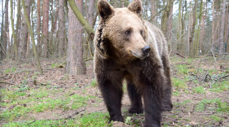 Cisna fot. Zoo Poznań