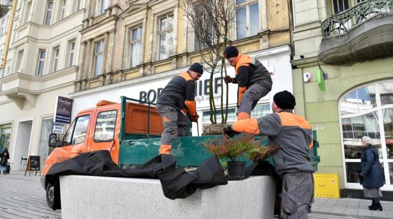 drzewa Święty Marcin fot. UMP