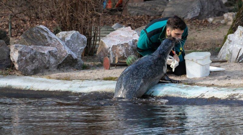 foki zoo poznan fot. slawek wachala 0382 800x445 - Poznań: Co robią zwierzęta, gdy w zoo nie ma ludzi? Zobaczcie foki!