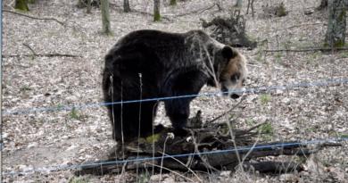 Gienia fot. Zoo Poznań