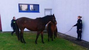 konie fot. straż miejska