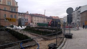 plac kolegiacki sadzenie drzew 1 fot. l. lada  300x169 - Poznań: Na placu Kolegiackim przybywa zieleni!