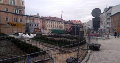 plac Kolegiacki sadzenie drzew 1 fot. L. Łada