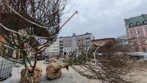 plac kolegiacki sadzenie drzew 2 fot. ump .jpg 300x169 - Poznań: Na placu Kolegiackim przybywa zieleni!