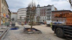 plac kolegiacki sadzenie drzew 3 fot. ump .jpg.jpg 300x169 - Poznań: Na placu Kolegiackim przybywa zieleni!