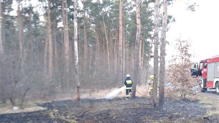 pożar lasu fot. OSP Golina