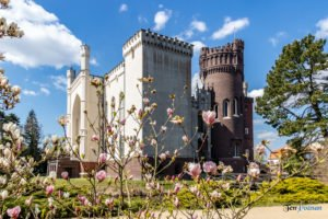 arboretum kornik fot. slawek wachala 6888 300x200 - W Kórniku kwitną magnolie!