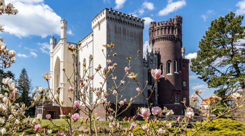 Arboretum w Kórniku Kórnik zamek magnolie fot. Sławek Wąchała