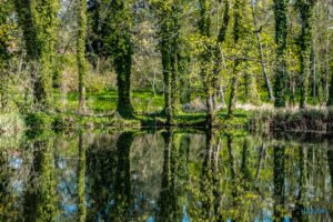 arboretum kornik fot. slawek wachala 6939 300x200 - W Kórniku kwitną magnolie!