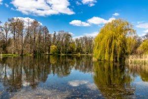 arboretum kornik fot. slawek wachala 6998 300x200 - W Kórniku kwitną magnolie!