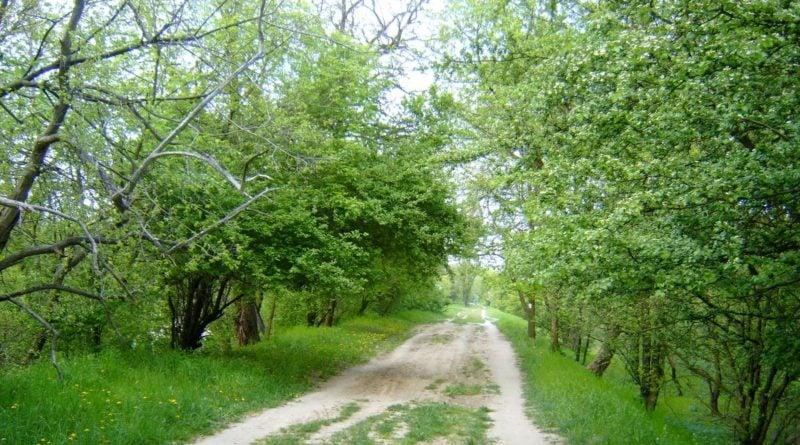 Las Dębina wiosną