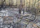 Poznań: Pożar lasu w Bogucinie