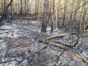 pozar lasu 2 fot. osp czerwonak 300x225 - Poznań: Pożar lasu w Bogucinie
