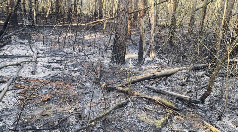 pożar lasu 2 fot. OSP Czerwonak