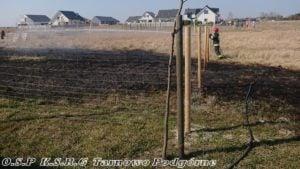 pozar traw fot. osp tarnowo podgorne 300x169 - Tarnowo Podgórne: Pożar traw