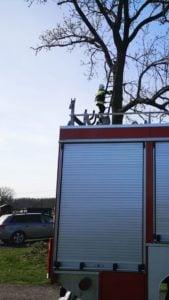 ratowanie kota fot. osp opalenica 169x300 - Opalenica: Jak strażacy przed świętami kota ratowali