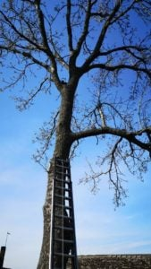 ratowanie kota2 fot. osp opalenica 169x300 - Opalenica: Jak strażacy przed świętami kota ratowali