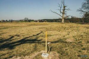 rogalin fot. slawek wachala 4905 300x200 - Rogalin: Protesty przeciwko sadzeniu... drzew. Kto chce zasłonić dęby?