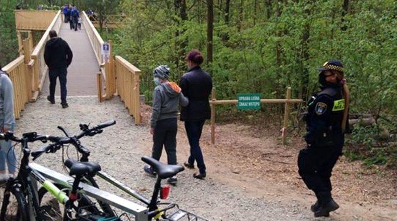 ścieżka w koronach drzew 2 fot. SMMP