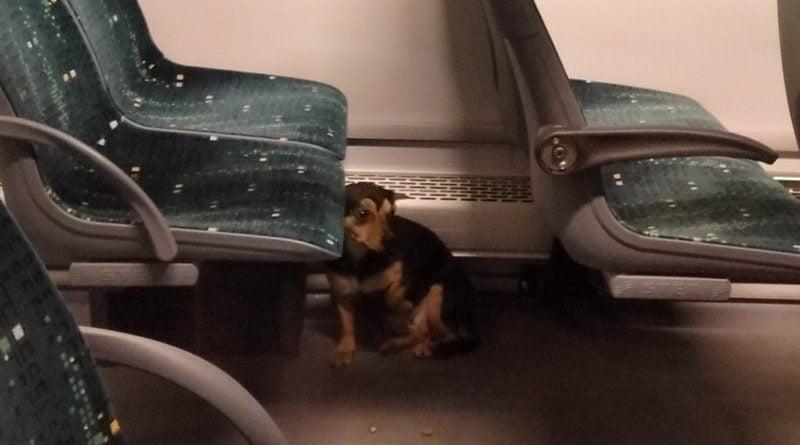 zaginiony pies fot. FB