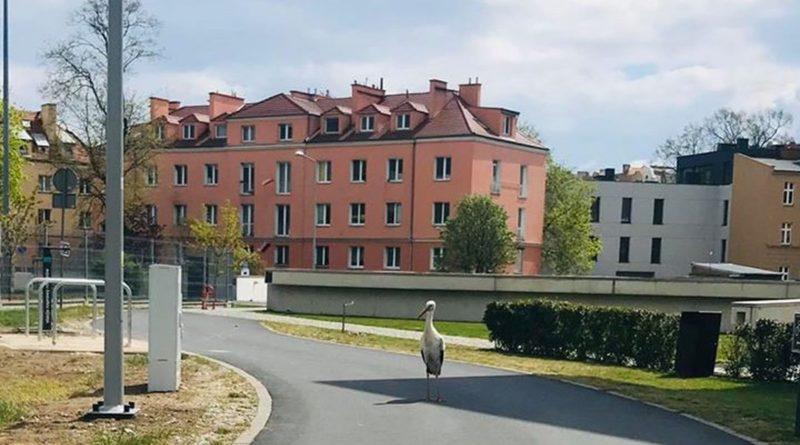 Bocian fot. P. Głogowski