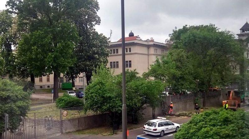 drzewa Libelta fot. T. Dworek