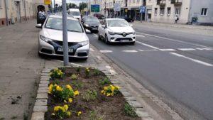 jezycka partyzantka ogrodnicza 3 300x169 - Poznań: Uwaga na partyzantów na Jeżycach!