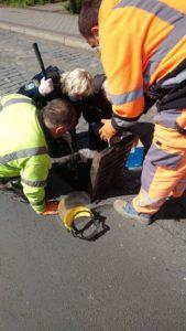 kaczki fot. smmp 169x300 - Poznań: Jak straż miejska kaczuszki ratowała